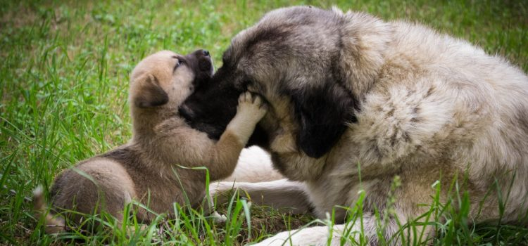 Puppy development stages and pitfalls of adopting out too soon
