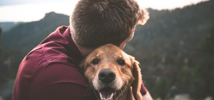 The benefits of touching your dog