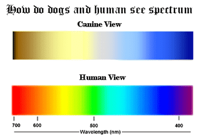 Dog vs human colour vision