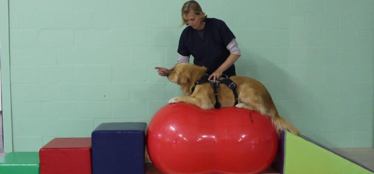Canine Core Ball